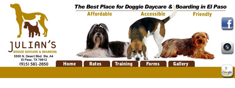 Julians doggie daycare boarding dog boarding el paso texas dog boarding el paso texas solutioingenieria Image collections